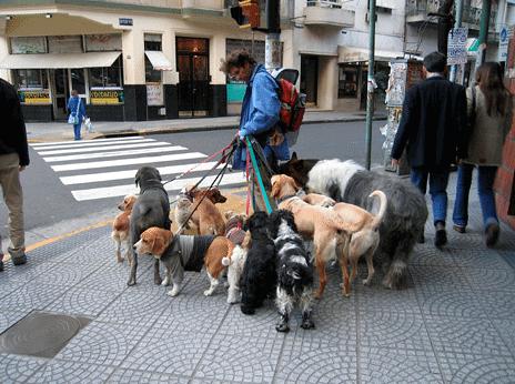side business ideas dog walker