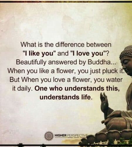 Inspirational Quotes On Love And Life Interesting Buddha Quotes About Life Death Peace And Love That Will Inspire You
