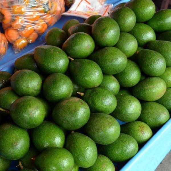 best brain food like avocados is great food for your brain