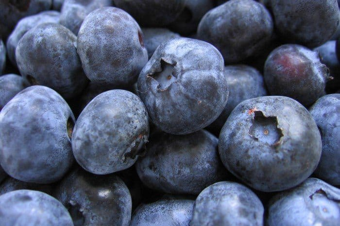 best brain food like blueberries is great food for your brain