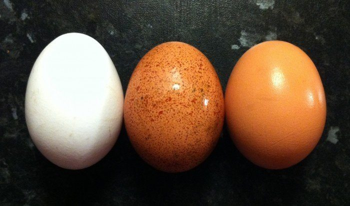 best brain foods like eggs are some of the best foods for the brain