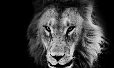 10 Ways to Unleash The Beast In You