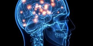 How Learning Physically Changes the Brain
