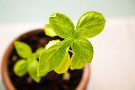 20 things bucket list grow veggies