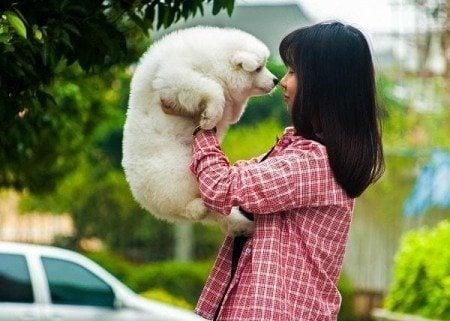 20 things bucket list adopt pet
