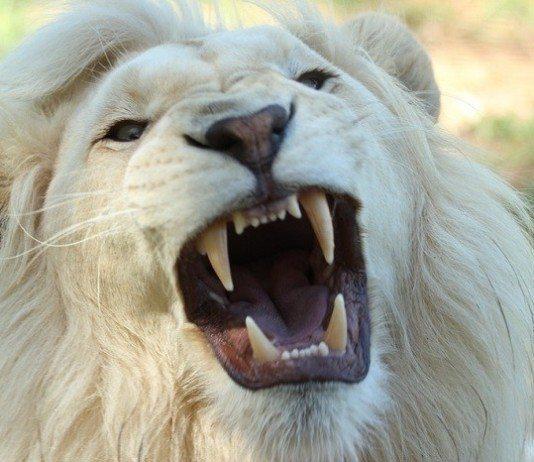 be a beast achieve success