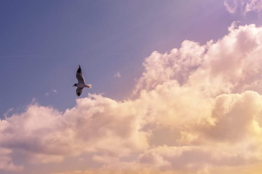 Scientific Benefits of Being an Early Bird