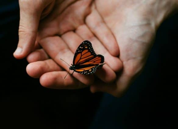 Use The Butterfly Effect To Create Massive Change
