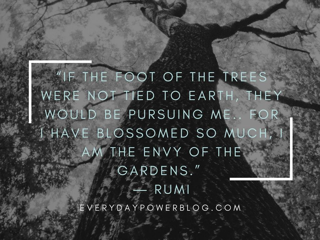 rumi quotes about growing like a tree