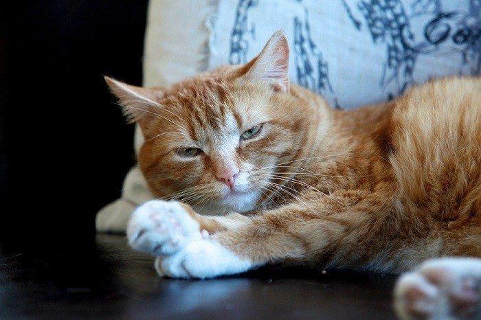 stop-procrastination-cat-lazy