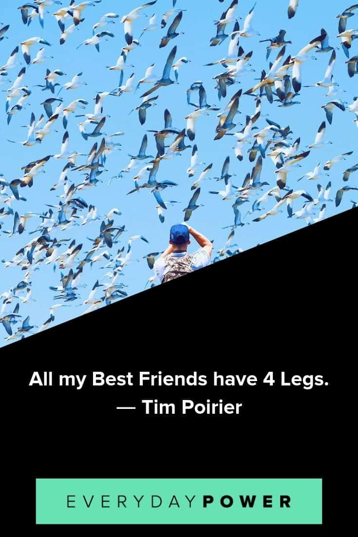 Animal Quotes Celebrating Their Role in Our Lives