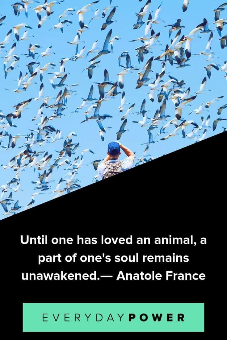 Animal quotes that will make you appreciate them