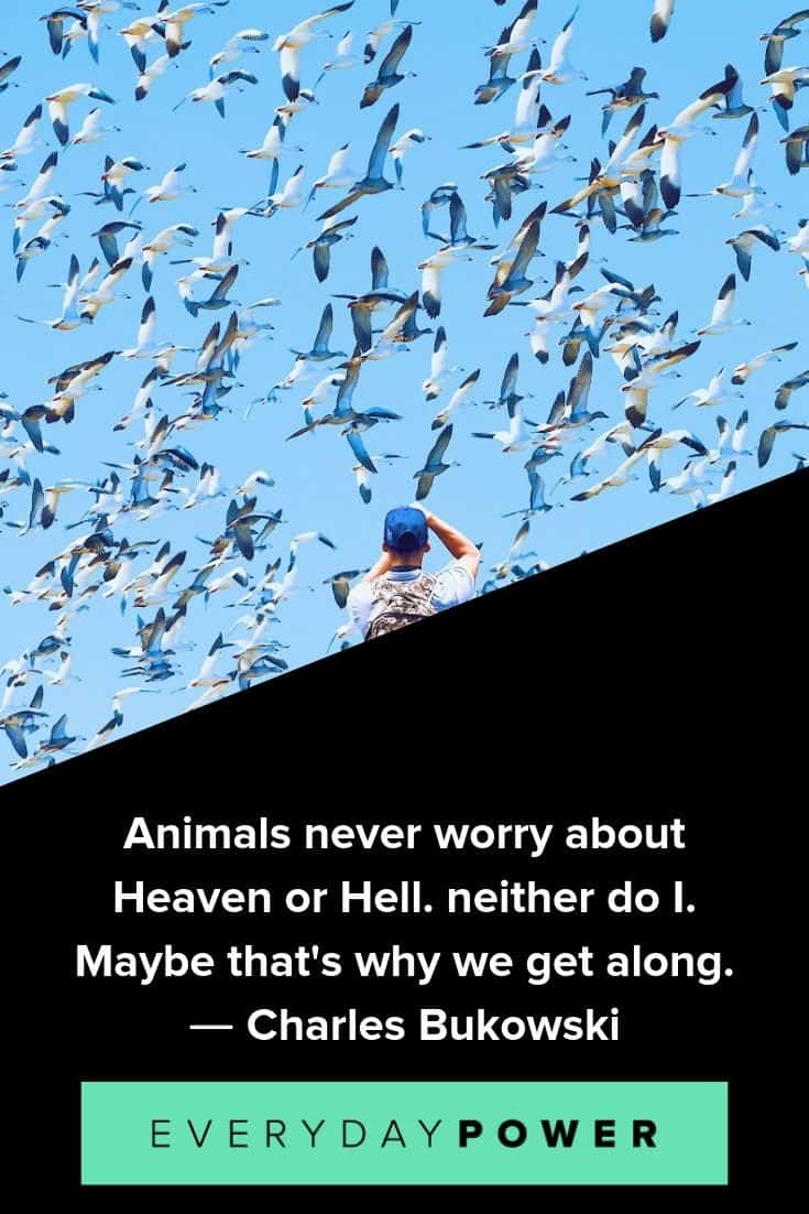 Animal quotes to inspire and teach