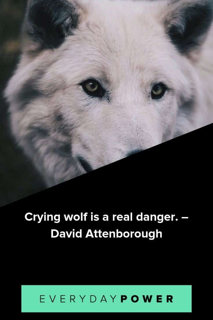 Wolf quotes on guardianship, loyalty and spirit
