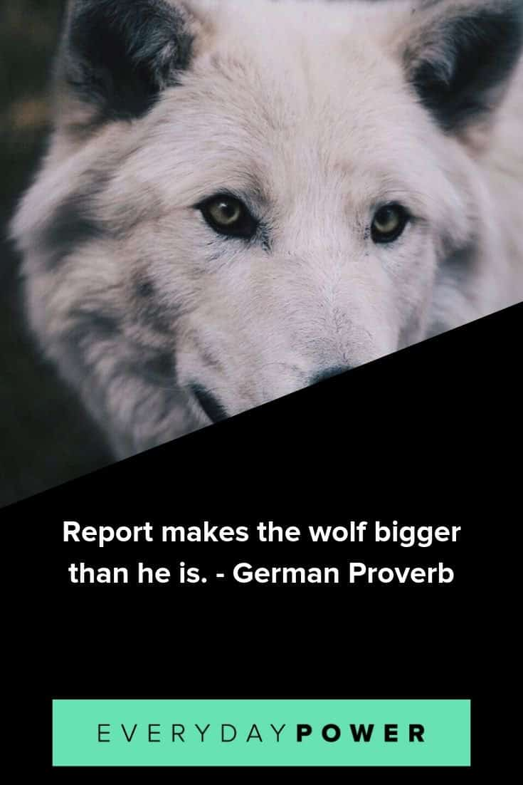 Wolf Quotes, Sayings and Proverbs Celebrating Your Instinct