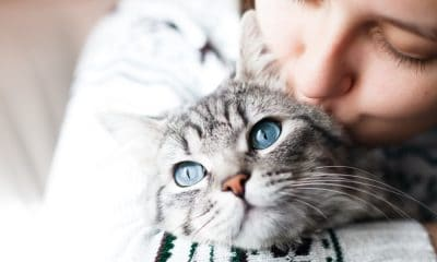50 Cat Quotes That Are Too Purrfect For Words
