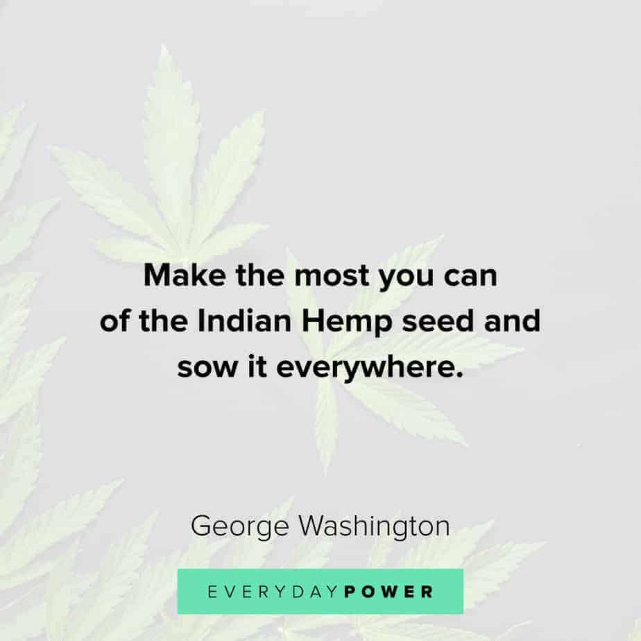 Weed Quotes about indian hemp