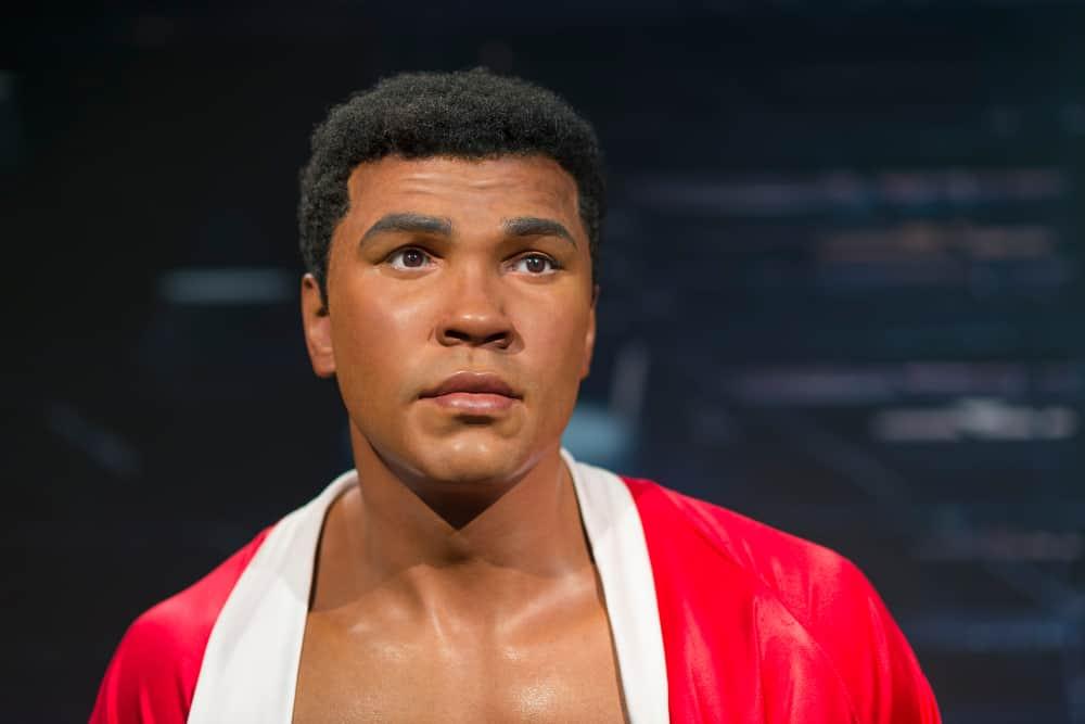 Muhammad Ali The Professional Boxer