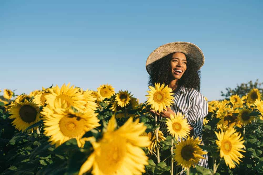 Inspiration Sunflower Quotes to Learn From