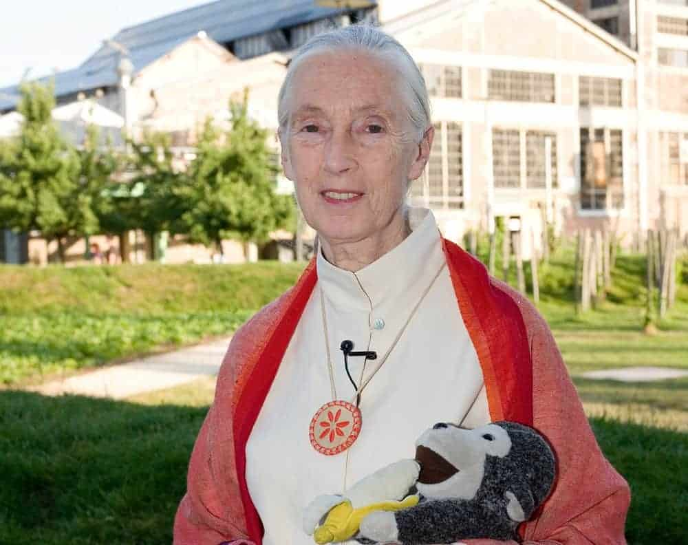 50 Inspiring Jane Goodall Quotes About the Environment