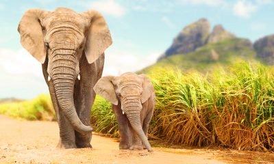 Elephant Quotes To Celebrate Animals & Nature