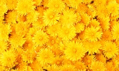 50 Yellow Quotes for a Happy Aesthetic