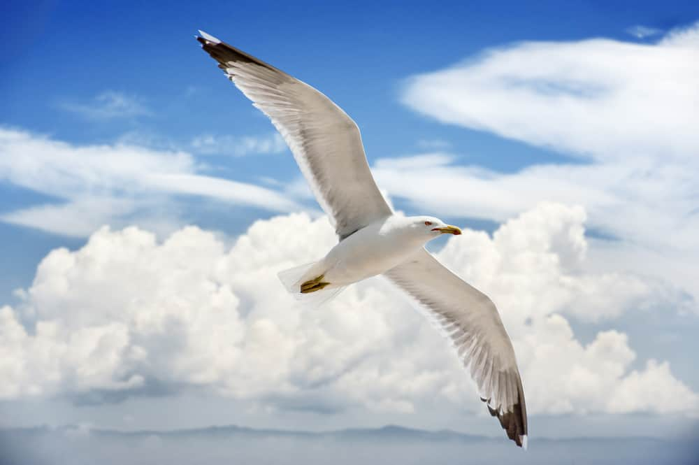 50 Jonathan Livingston Seagull to Help Your Dreams Take Flight