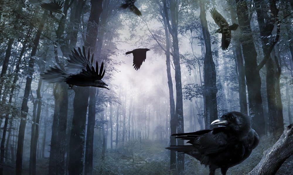 50 Crow Quotes Bad Omen or Misunderstood Bird