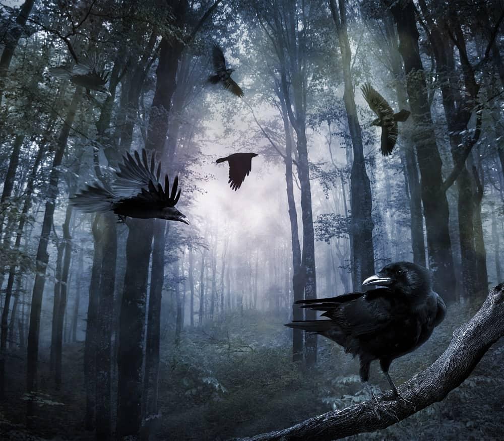 50 Crow Quotes: Bad Omen or Misunderstood Bird?