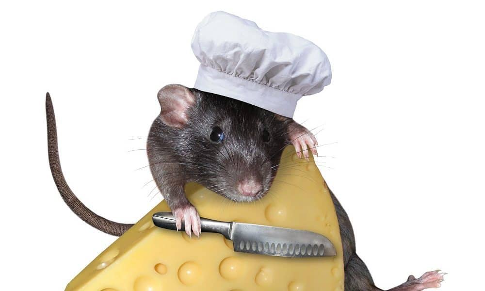 50 Ratatouille Quotes That Prove Anyone Can Be Great