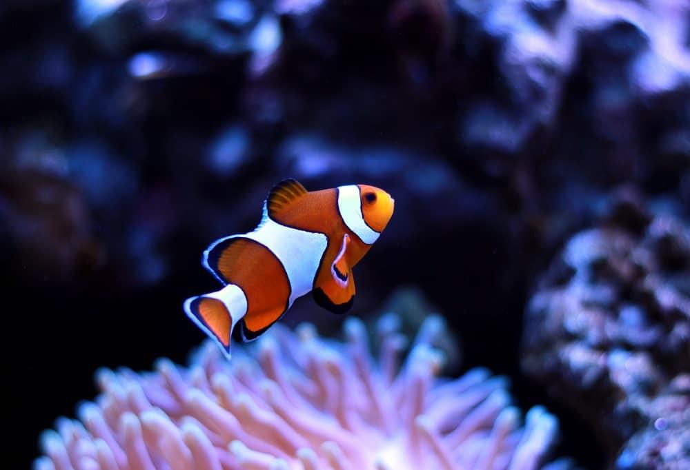 50 Fun, Inspiring, & Fin-tastic Finding Nemo Quotes