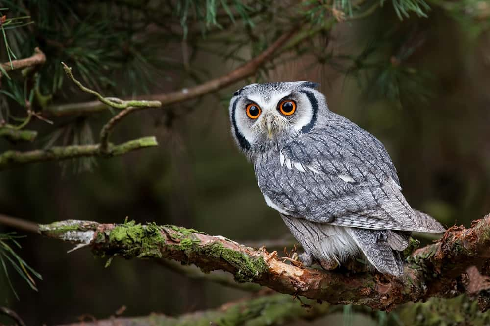 50 Owl Quotes About the Wide-Eyed Night Predator