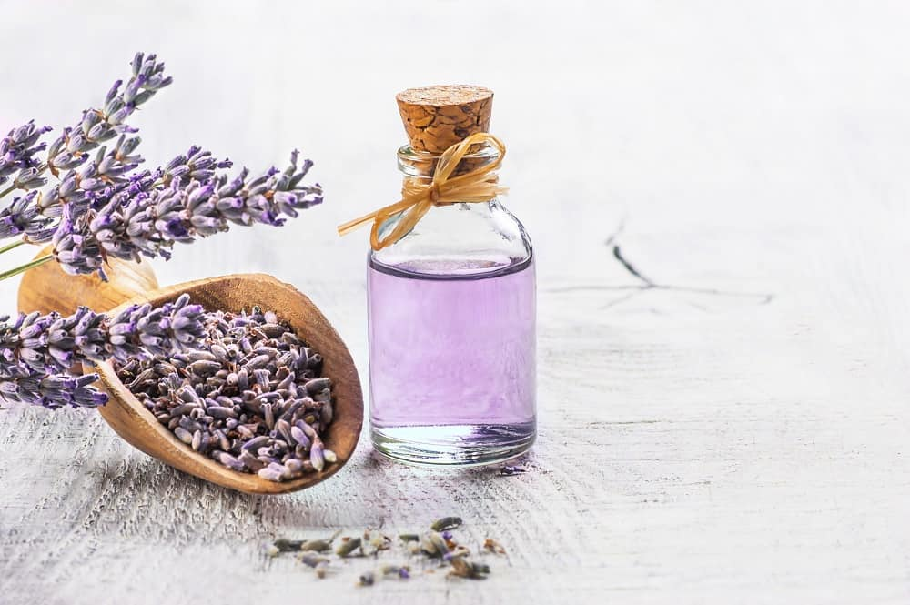 Lavender Quotes About the Calming Herb