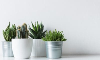 50 of the Best Cactus Quotes and Sayings