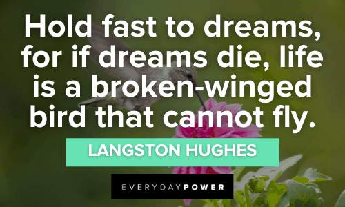 Bird Quotes about dreams