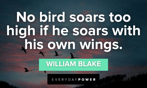 Bird Quotes to spread your wings