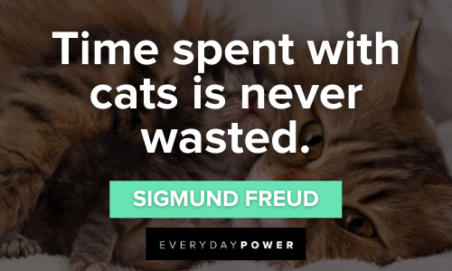 Pet Quotes about time