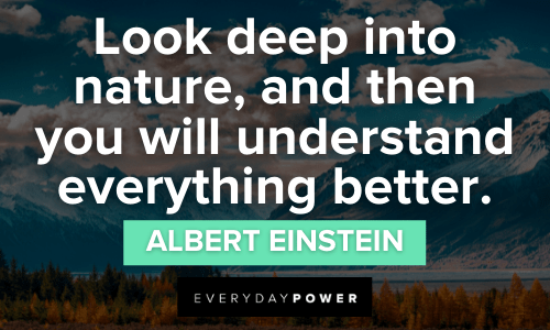 Forest quotes about nature