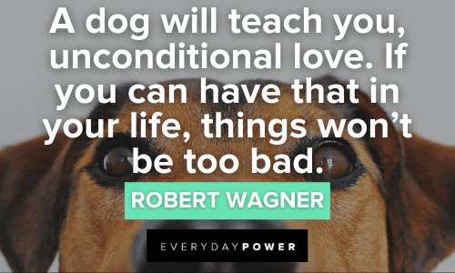 Dog Quotes about unconditional love